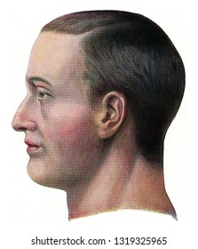 Head of a European, vintage engraved illustration. From the Universe and Humanity, 1910.