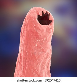 Hookworm Images, Stock Photos & Vectors | Shutterstock