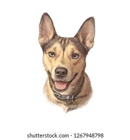 Royalty Free Kelpie Puppy Images Stock Photos Vectors Shutterstock