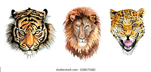 head of a tiger, a lion and a leopard watercolor illustration