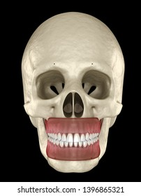 Healthy human teeth with normal occlusion. Medically accurate tooth 3D illustration