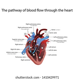 heart anatomy and types of heart disease illustration