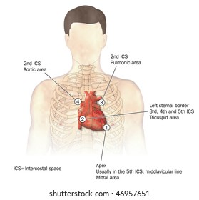 Auscultation heart diagram unlabeled wiring diagram database auscultation heart diagram unlabeled auto electrical wiring diagram u2022 rh 6weeks co uk blank heart diagram printable heart diagram to label ccuart Gallery