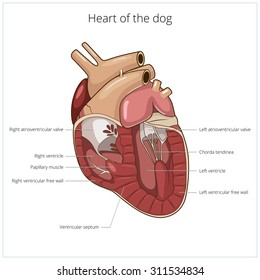 Heart of a dog raster version