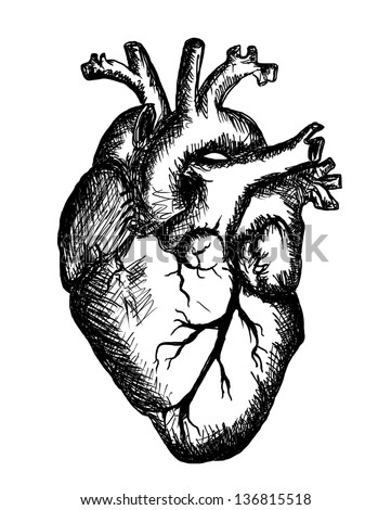Heart Drawing heart drawing on white background stock illustration 136815518