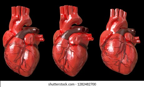 Heart human model in real shape with 3d rendering.