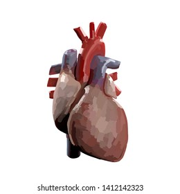 Heart infographic. Anatomical icon of heart on white background.3d Illustration.