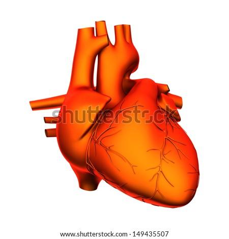 Heart Internal Organs Isolated On White Stock Illustration 149435507
