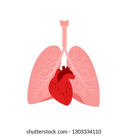 Heart and lungs. Internal organs in a male human body. Anatomy of people.Part of the human heart. Anatomy. Diastole and systole.Filling and pumping of Human Heart structure anatomy. bitmap