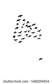 Heart shaped flock of black birds (silhouette) against a white sky