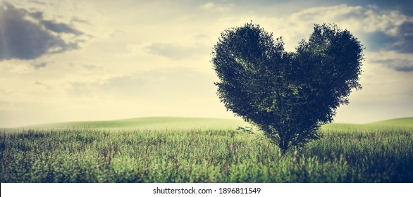 Heart shaped tree on green field. Concepts of love, Valentine's day, eco environment. 3D illustration