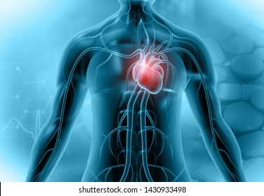 Heart in transparent human body. 3d illustration