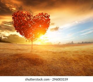 heart tree in the field
