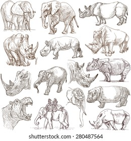 HEAVY ANIMALS (Elephants, Hippos and Rhinos) - Collection of an hand drawn illustrations. Description - Full sized hand drawn illustrations, freehand sketches, drawing on white background.