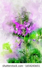 Herb willow-herb (Chamerion angustifolium). Stylization in watercolor drawing.