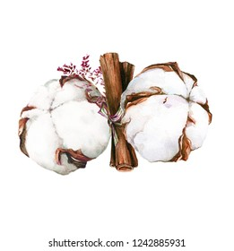 Herbal composition with cotton and cinnamon. Watercolor illustration of high quality.