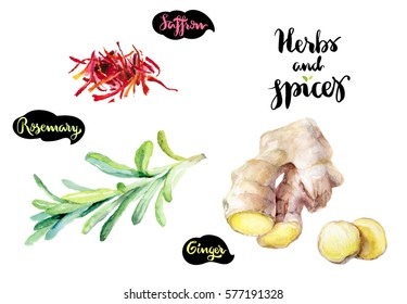 Herbs and spices kitchen watercolor set. Saffron, rosemary, ginger watercolor hand draw illustration isolated on white background.