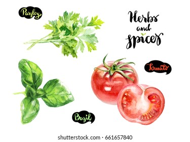 Herbs and spices kitchen watercolor set. Basil, tomatoes, parsley watercolor hand draw illustration isolated on white background.