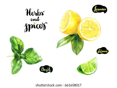 Herbs and spices kitchen watercolor set. Basil, lemon, lime watercolor hand draw illustration isolated on white background.
