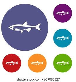 Herring fish icons set in flat circle reb, blue and green color for web
