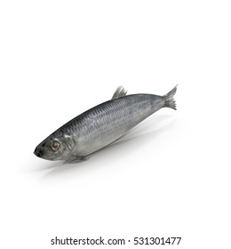 Herring fish isolated on white. 3D illustration