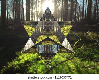hexagon in forest