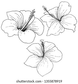 Hibiscus floral tropical flowers. Wild spring leaf wildflower isolated. Black and white engraved ink art. Isolated hibiscus illustration element on white background on white background.