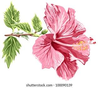 Hibiscus flower. Bitmap copy my vector