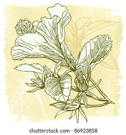 Hibiscus flower - hand draw. Bitmap copy my vector id 11813662