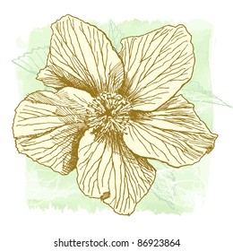 Hibiscus flower - hand draw. Bitmap copy my vector id 11721709