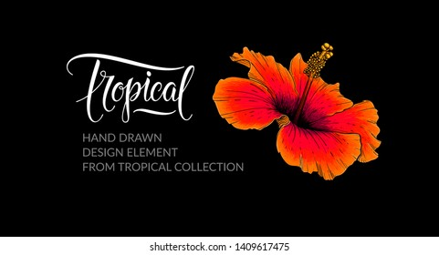 Hibiscus flower. Isolated on black. Tropical banner with flower and lettering. Design element for hibiscus tea packaging, tropical pattern, summer party, wedding invitation. Nature illustration