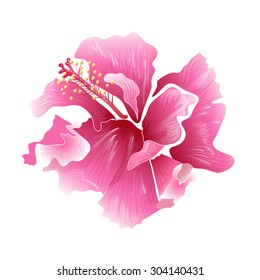 Hibiscus flower - surfing and tropical symbol, vector illustration