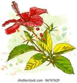 Hibiscus flower - watercolor paint. Bitmap copy my vector ID 11504269