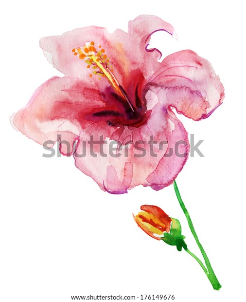 Hibiscus Flower Watercolor Painting Stock Illustration 176149676