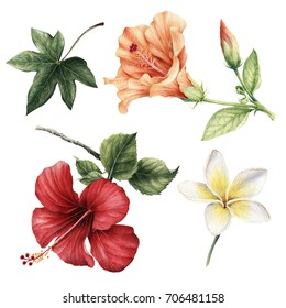 Hibiscus flowers.Watercolor, can be used as greeting card, invitation card for wedding, birthday and other holiday and summer background