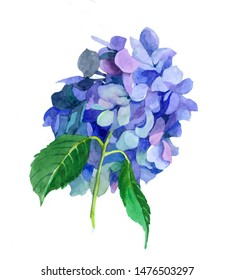 Hidrangea flowers watercolor isolated on white background illustration for all prints on hand painting style.