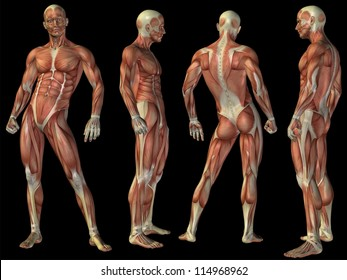 High resolution concept or conceptual human or man 3D anatomy body with muscle isolated on black background as a metaphor to medicine,sport,male,muscular,medical,health,biology or fitness group or set