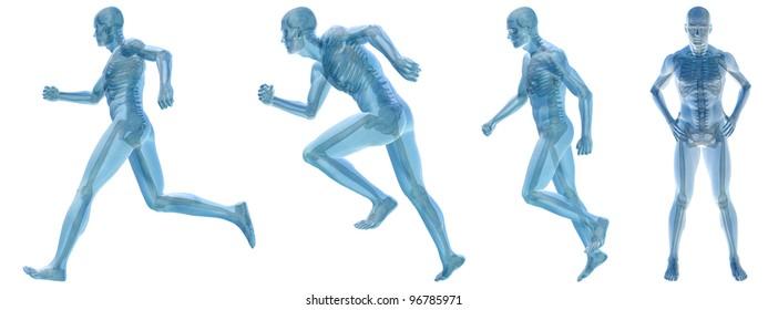 High resolution conceptual man anatomy illustration on white background
