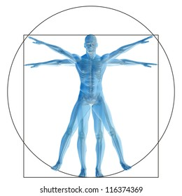High resolution Vitruvian human or man as concept,metaphor or conceptual 3d anatomy body for biology,anatomical, Leonardo,proportion ,medicine,symbol,physiology,skeleton,health,humanity or morphology