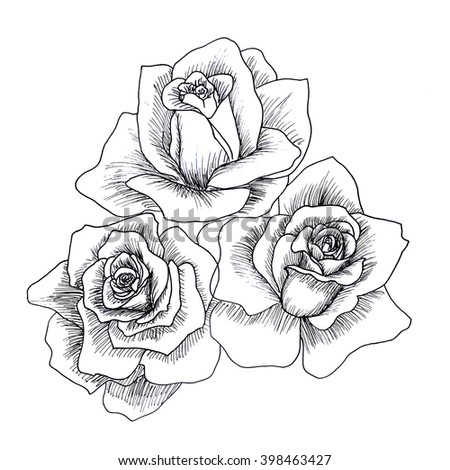 Highly Detailed Hand Drawn Roses Isolated Stock Illustration