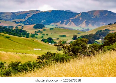 Hillside view of green valley with ranch buildings and grazing cattle on the outskirts of Petaluma on an overcast day in northern California, USA, in spring, with digital oil-painting effect