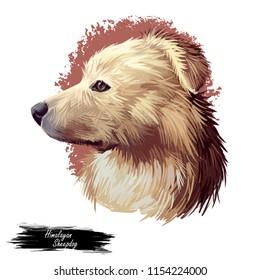 Himalayan Sheepdog, Bhotia, Himalayan Shepherd dog digital art illustration isolated on white background. Nepal, China, India origin guardian dog. Pet hand drawn portrait. Graphic clip art design