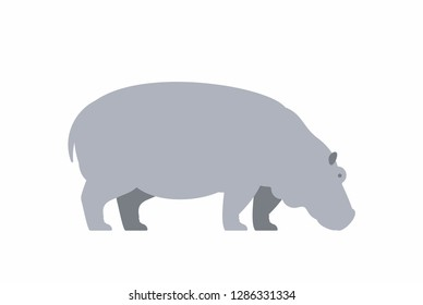 Hippo. isolated on white background