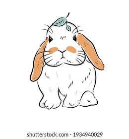 holland lop bunny drawing from freehand illustration on white background