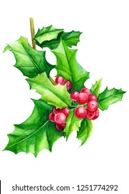 holly branch with berries, christmas decorations on a white background, watercolor illustration, hand drawing