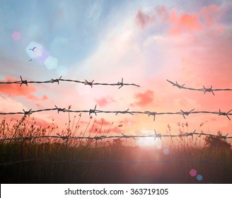 Holocaust memorial day concept: Art of sun light with silhouette broken barbed wire on meadow sunset background