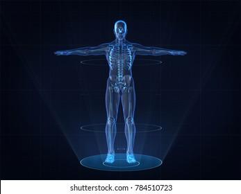 Hologram Human anatomy and skeleton,3D rendering