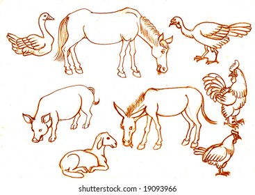 Home animals on a white background