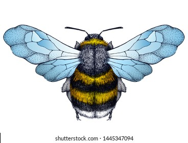 Honey bee tattoo. Bee with blue wings. Dotwork tattoo. Symbol of diligence, economy, purity, immortality, fertility and chastity. Illustration for stylish t-shirt