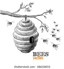 Honey bees and hive on tree branch isolated  illustration